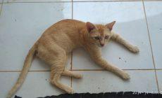 Permalink ke Kucing Bikin Masalah