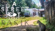 Permalink ke Street Cat Named Racik